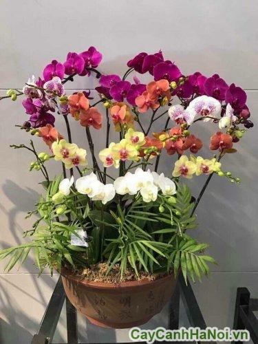 Hoa lan hồ điệp trong phong thủy